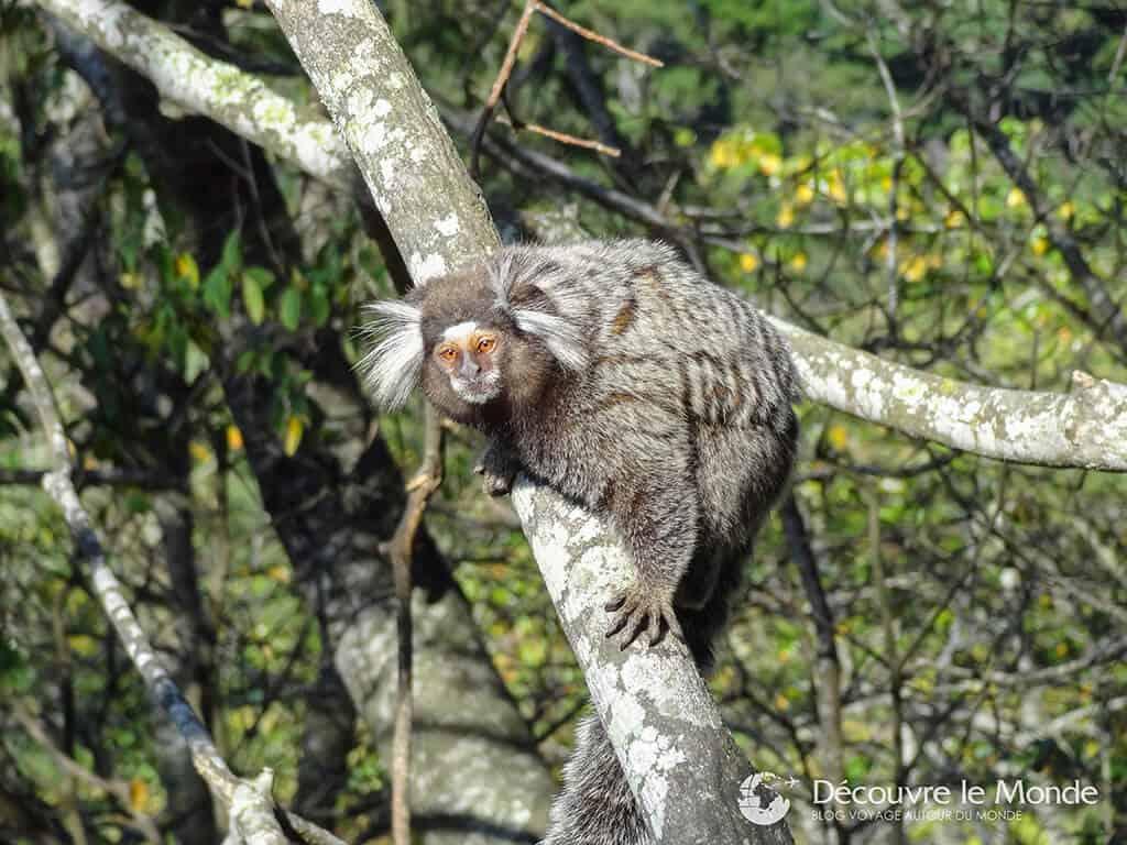 singe-jardin-botanique