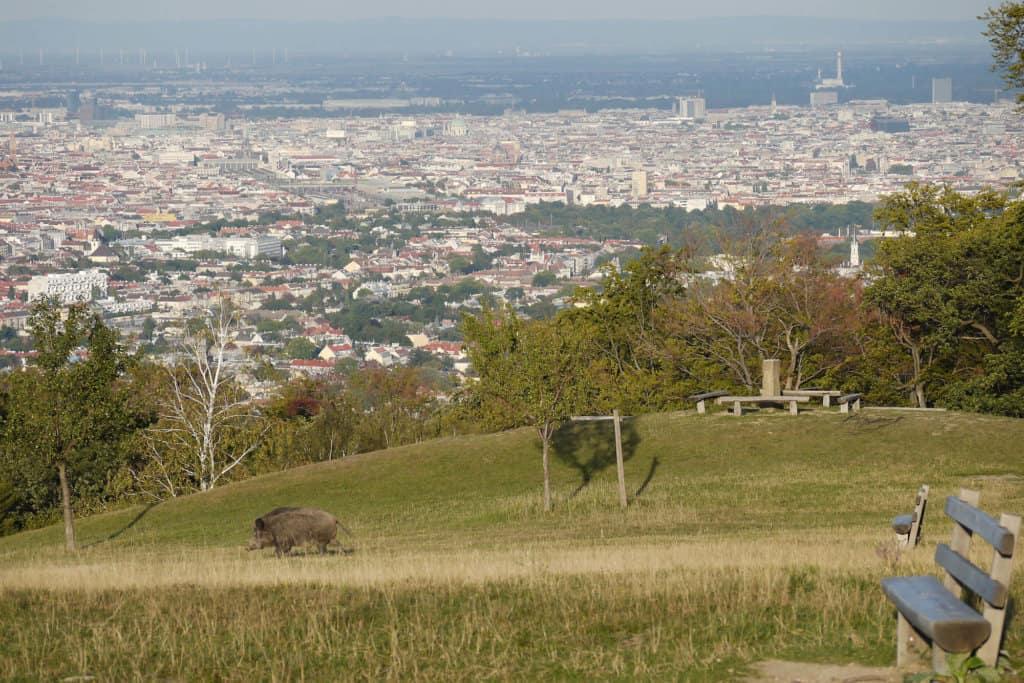 vienne Lainzer Tiergarten