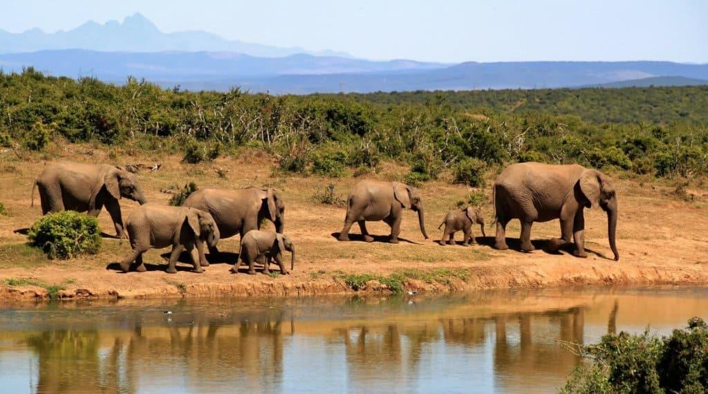 decouvrir kruger national parc