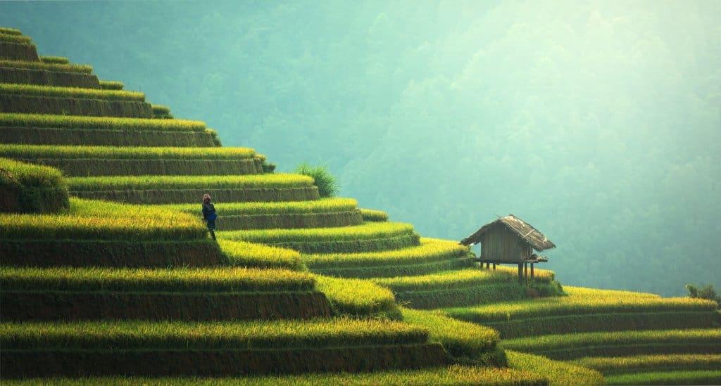 rizieres en thailande