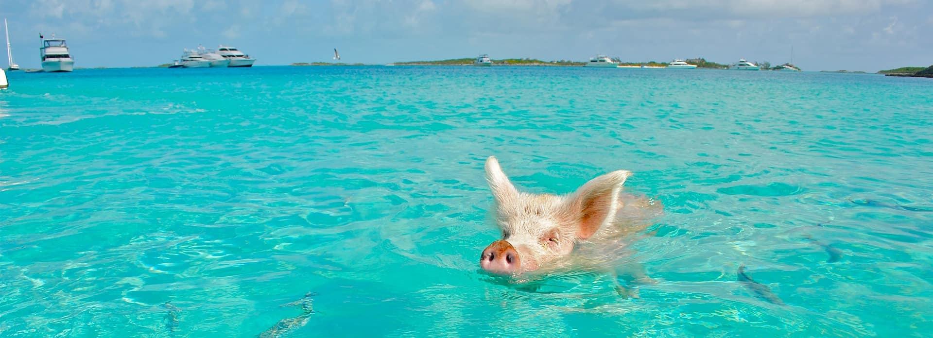 decouvrir les bahamas