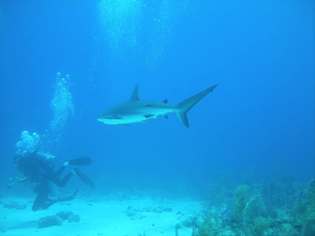 nager aux bahamas